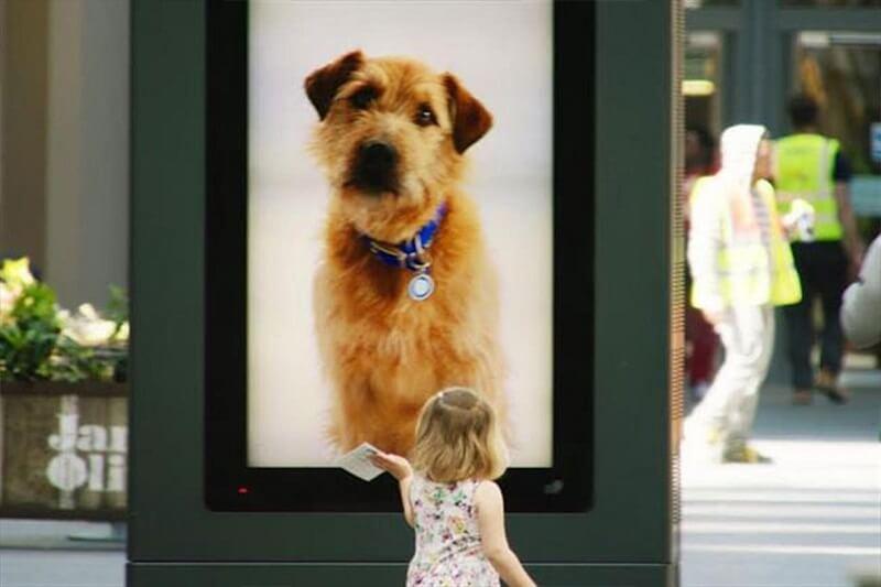 chiến dịch quảng cáo DOOH tương tác trung tâm bảo vệ động vật Battersea